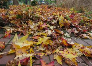 """In besonderen Fällen gibt's für das Laub aus Nachbars Garten sogar """"Rente"""". (Foto: Eberth)"""